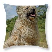 Pyrenean Sheepdog Throw Pillow