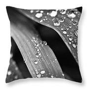 Raindrops On Grass Blades Throw Pillow