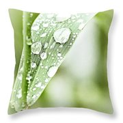 Raindrops On Grass Throw Pillow