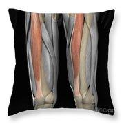 Rectus Femoris Muscles Throw Pillow
