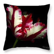 Red And White Parrot Tulip Throw Pillow