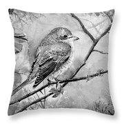 Red Backed Shrike Throw Pillow