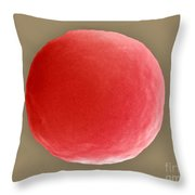 Red Blood Cell In Hypotonic Solution Throw Pillow