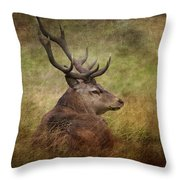 Red Deer  Cervus Elaphus Throw Pillow