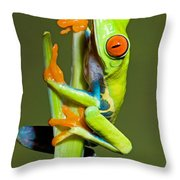 Red Eye Tree Frog Throw Pillow