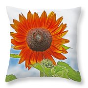 Red Face Sunflower At Olympia Throw Pillow