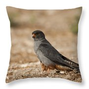 Red Footed Falcon Falco Vespertinus Throw Pillow