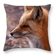 Red Fox In Prospect Park Throw Pillow