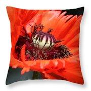 Red Orange Poppy Throw Pillow