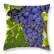 Red Wine Grapes Hanging On The Vine Throw Pillow
