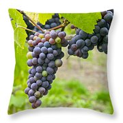 Red Wine Vineyard 2 Throw Pillow
