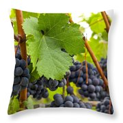 Red Wine Vineyard 3 Throw Pillow
