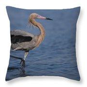 Reddish Egret Wading Texas Throw Pillow