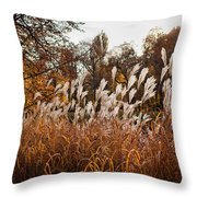 Reeds Highlighted By The Sun Throw Pillow