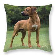 Rhodesian Ridgeback Dog Throw Pillow