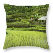 Rice Fields In Bali Indonesia Throw Pillow