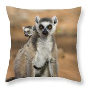 Ring-tailed Lemur And Baby Madagascar Throw Pillow