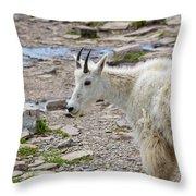 Rocky Mountain Goat Throw Pillow