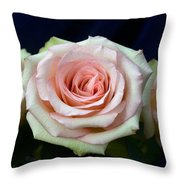 Roses 8405 Throw Pillow