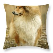 Rough Collie Dog Throw Pillow