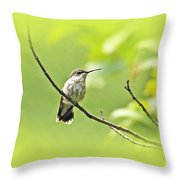 Ruby-throated Hummingbird - Immature Female - Archilochus Colubris  Throw Pillow