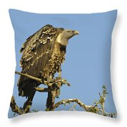Rueppells Vulture Throw Pillow