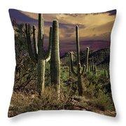 Saguaro Cactuses In Saguaro National Park Throw Pillow