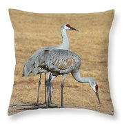 Sand Hill Cranes Eating Throw Pillow