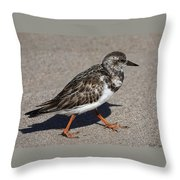 Ruddy Turnstone On The Beach Throw Pillow