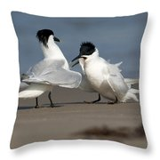 Sandwich Tern Bringing Fish To Its Mate Throw Pillow