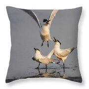 Sandwich Tern Throw Pillow