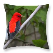 Scarlet Tanager  Throw Pillow