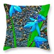 Scilla In New Maiden Cemetery In Moscow-russia  Throw Pillow