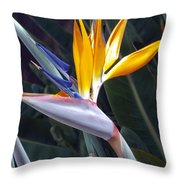 Seaport Bird Of Paradise Throw Pillow