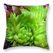 Sempervivum Tectorum Throw Pillow