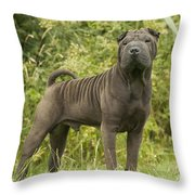 Shar Pei Dog Throw Pillow