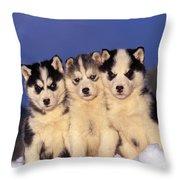 Siberian Husky Puppies Throw Pillow