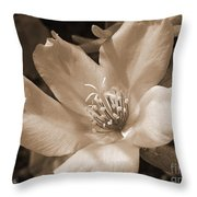 Single Portulaca Throw Pillow