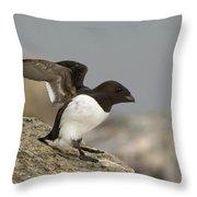 Sitting Dovekie Throw Pillow
