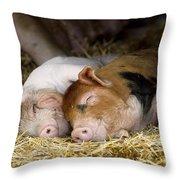 Sleeping Hogs  Throw Pillow