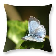 Small Blue Butterfly Throw Pillow