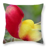 Snapdragon Named Floral Showers Red And Yellow Bicolour Throw Pillow