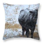 Snow Angus Throw Pillow
