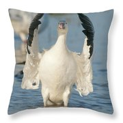 Snow Goose Flapping Skagit River Throw Pillow