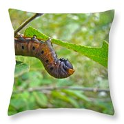 Snowberry Clearwing Hawk Moth Caterpillar - Hemaris Diffinis Throw Pillow