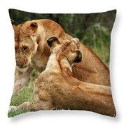 Sociable Lions   Throw Pillow