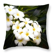 Soft Plumeria Throw Pillow