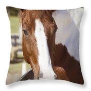 Sonny Throw Pillow