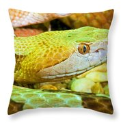 Southern Copperhead Throw Pillow