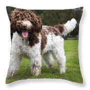 Spanish Water Dog Throw Pillow